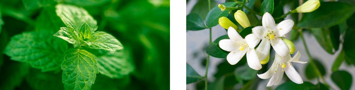 Mahahapot kuriin hedelmäkuiduilla